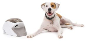 dog with remote trainer